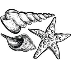 "Акриловый штамп ""Ракушки и морская звезда"" 6.5х4.5 см"