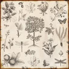 Двусторонняя бумага Botanical 30х30 см от компании Echo Park