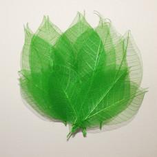 Набор скелетированных листиков зеленого цвета, 10 шт., 7,5 см.