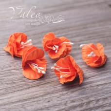 Декоративные бумажные Полевые цветы 25*25мм 5шт цвет оранжевый 2962 Valeo