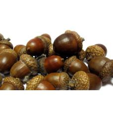 Желудь натуральный, темно-коричневый, 1 шт, 2-3 см