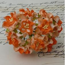 Набор 5 гардений оранжевого и персикового цвета, 35-40 мм