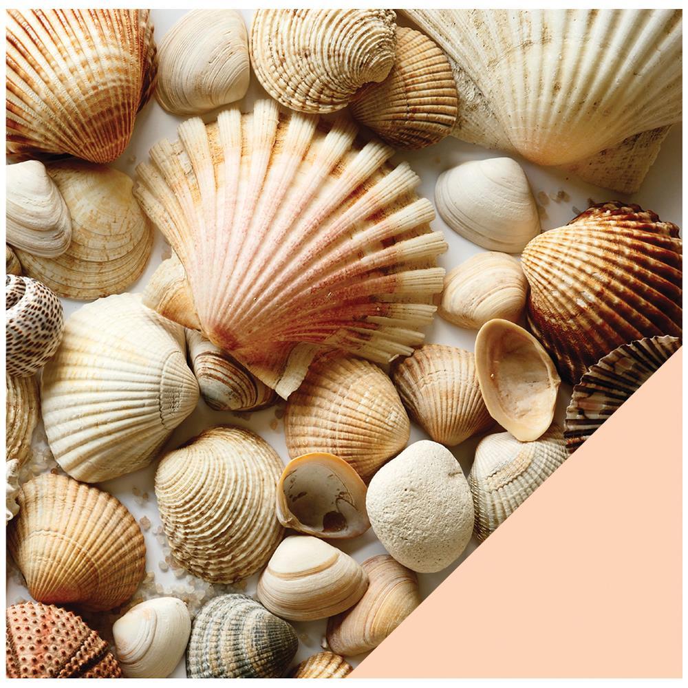 Двусторонняя бумага Shells, 30*30 см от American Crafts